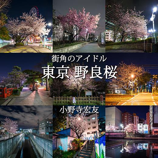 野良桜バナー52.jpg